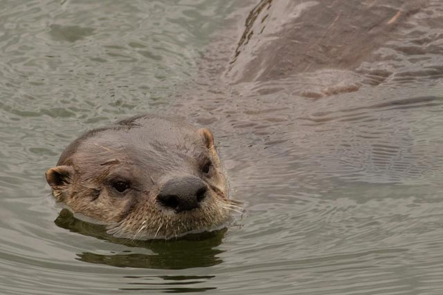 sea otter photo